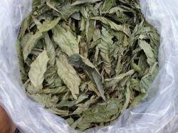 Chacrona (Psychotria viridis) - 100 gramas de Folhas inteiras